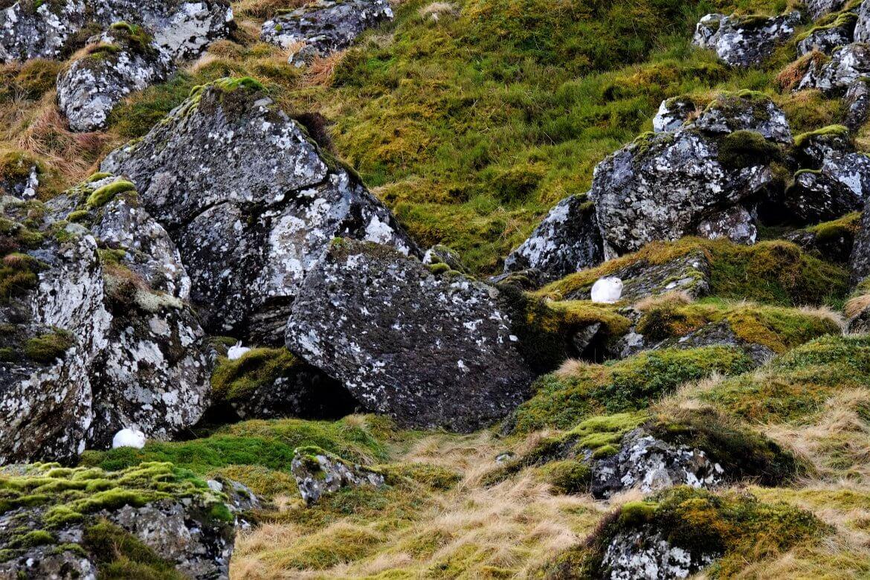Mountain-Hares-2