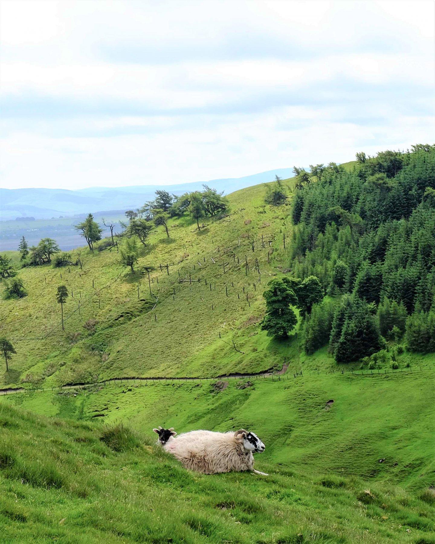 Pentland-Hills-Edinburgh-10