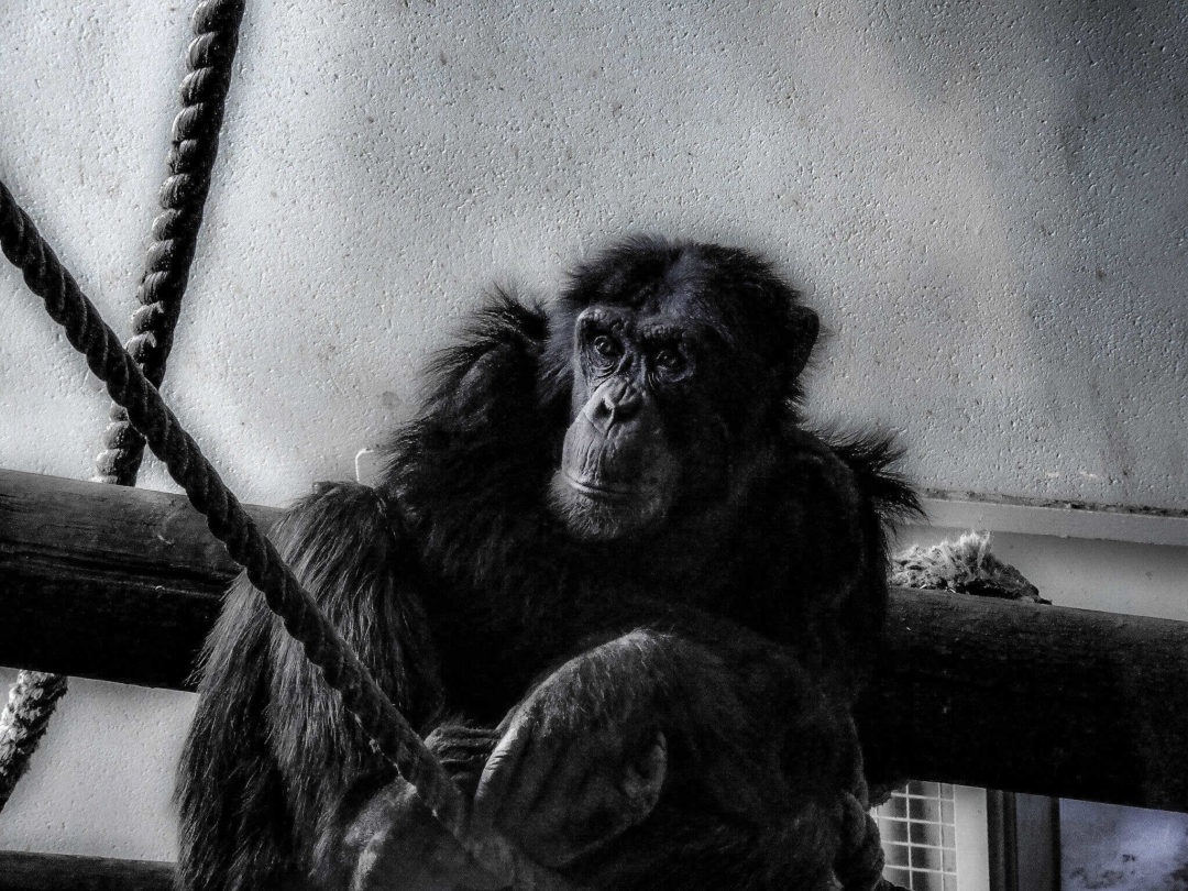 Edinburgh Zoo Portraits