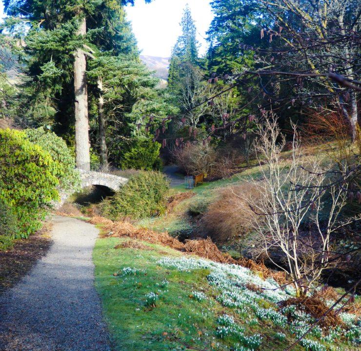 Dawdling at Dawyck Botanic Garden