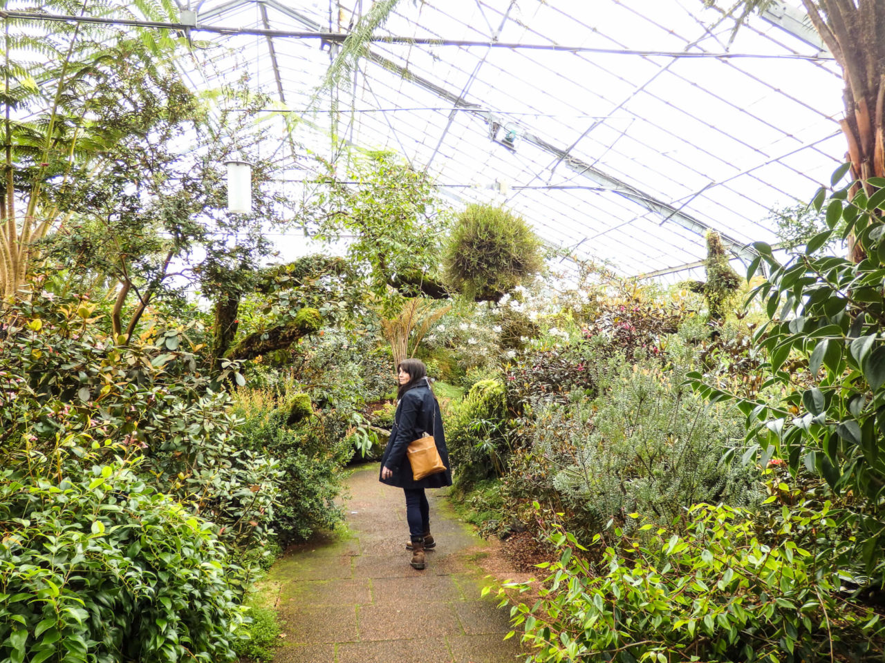 Edinburgh glasshouses