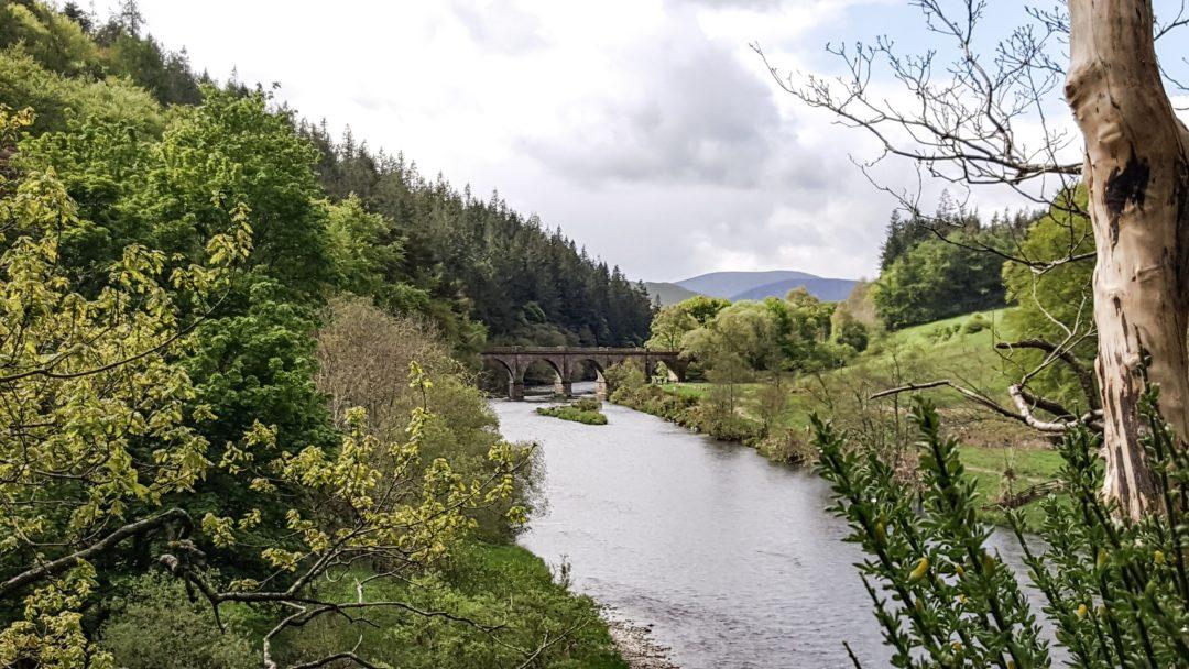 River Tweed Peebles (2)