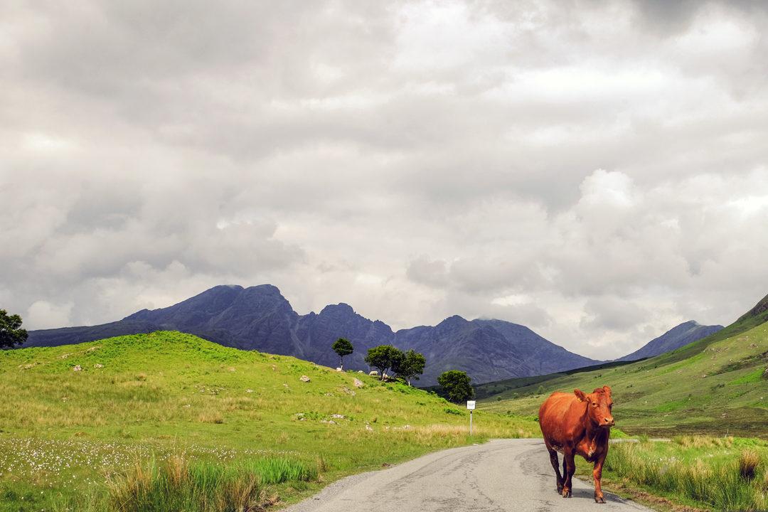 the Elgol Peninsula, Skye