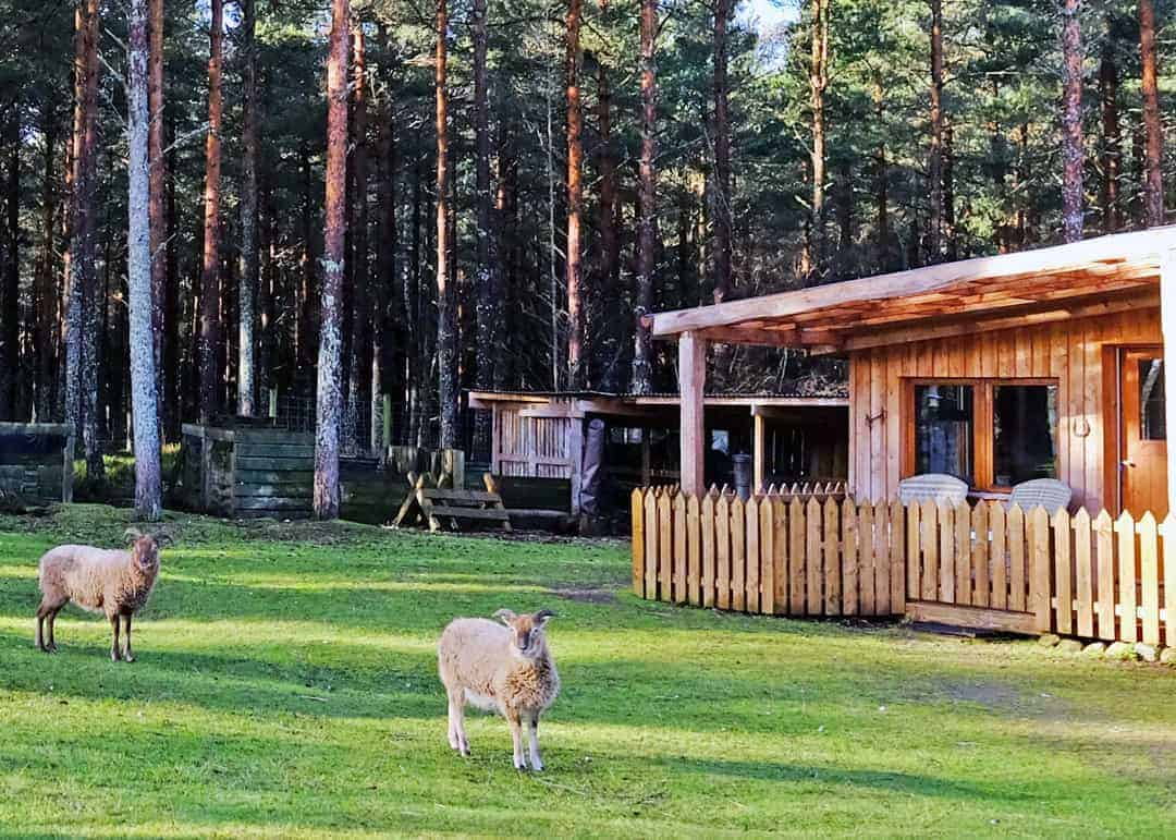 Lazy Duck log cabin scotland