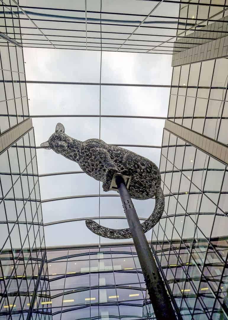 Aberdeen Leopard