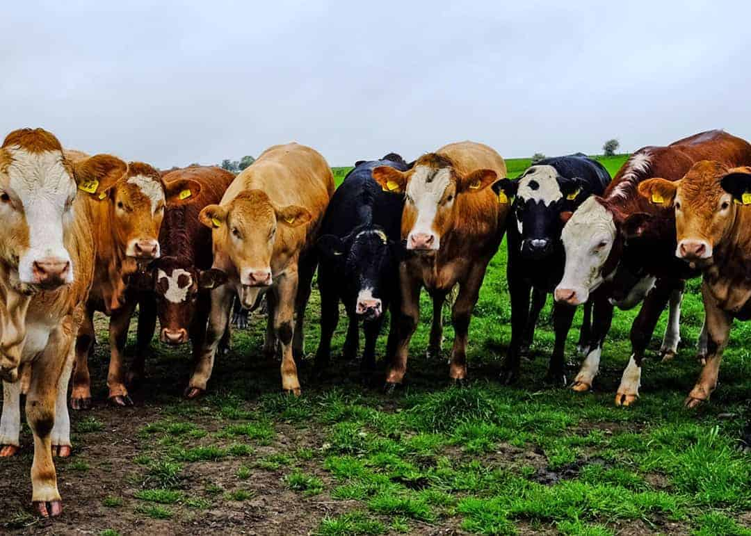 Down on the farm at Craigduckie, Fife