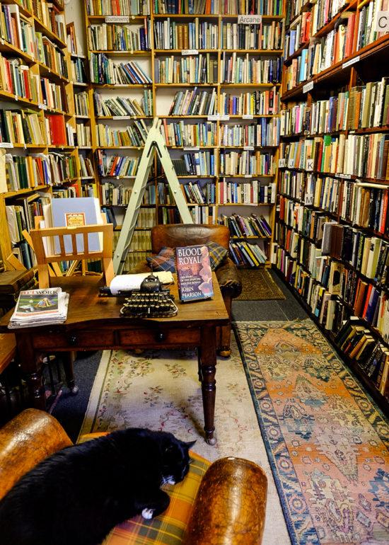 Wigtown Bookshop Cat
