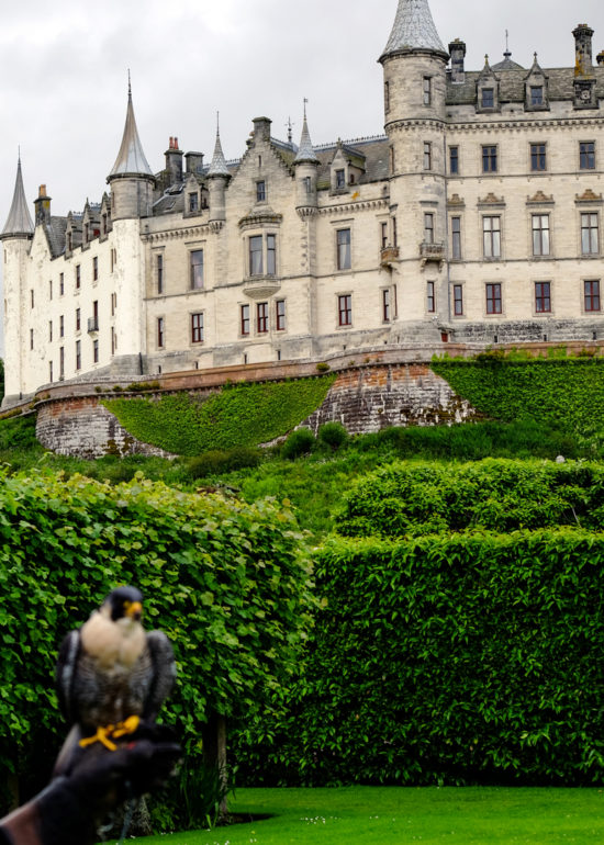 Falconry Dunrobin Castle