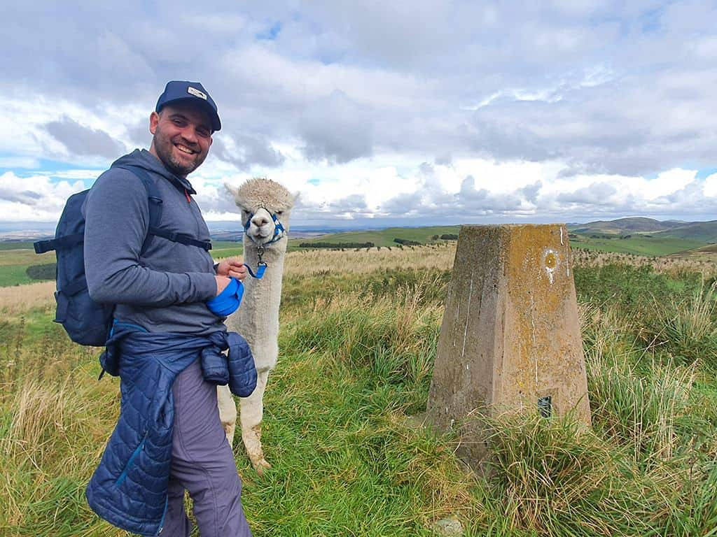 Trekking with alpacas Cheviot Hills