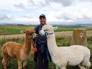 Alpaca walking Scotland - trekking with alpacas