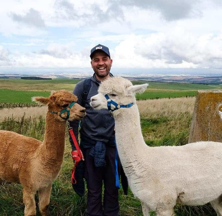 Alpaca trekking in Scotland at Beirhope Farm