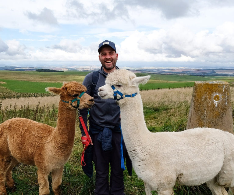 Alpaca walking Scotland - trekking with alpacas