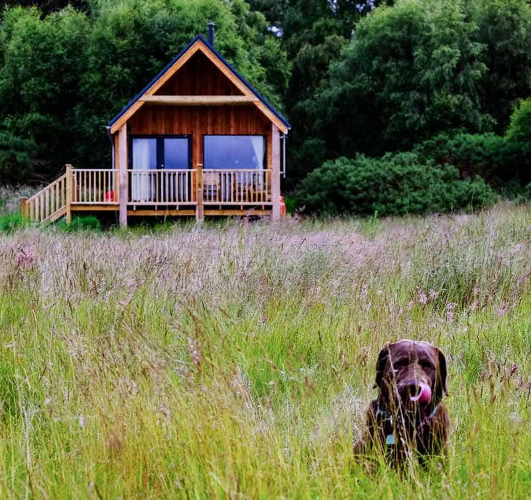 Dog friendly accommodation in Scotland