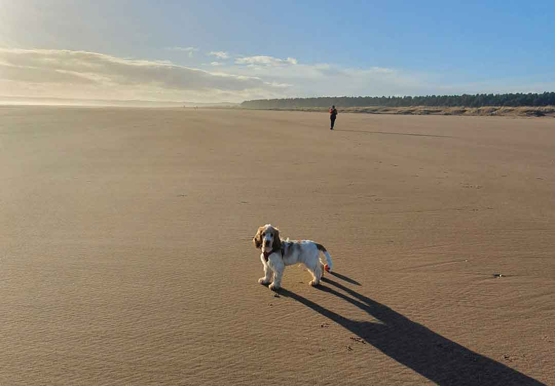 Beaches for Dogs Scotland