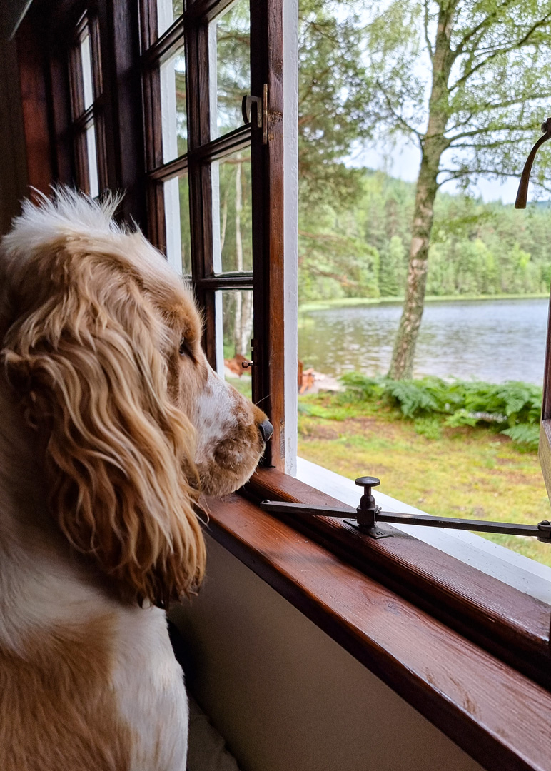 Queens Hut Aboyne Cabin Cairngorms dog