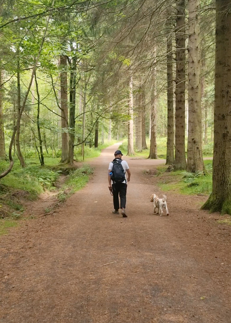 kinnoull Hill Woodland park dogs